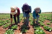 Syria's Refugee Children Forced Into Labor
